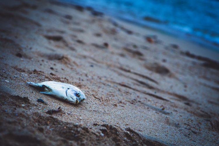 vietnam angeln giftstoffe